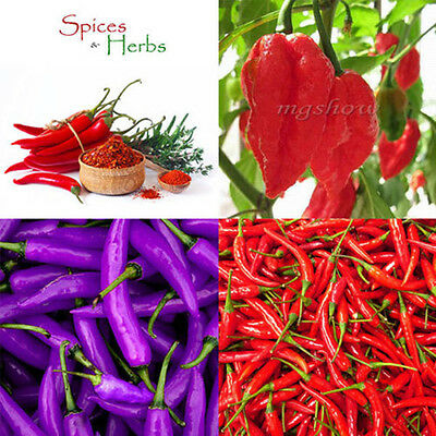 30Pcs-120Pcs Pepper Seeds Carolina Special Vegetable Garden Chili Plant Hot Red