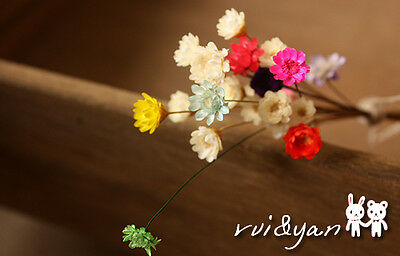 Mini Natural Dry Flower Small Daisy Dyed for Jewelry Making Craft DIY Findings