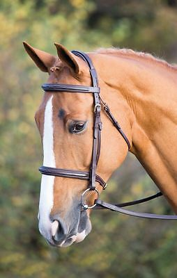 SALISBURY FAIRFORD BRIDLE Raised Padded Headpiece & Cavesson Noseband