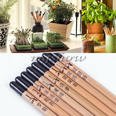 8 Pieces/Set Sprouting Sprout Pencil Plant - Herb Basil Tomato Green Pepper New