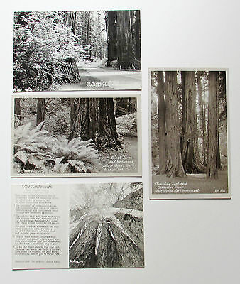 Muir Woods Photographic Postcards