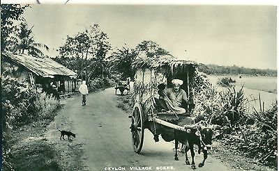 POSTCARD  CEYLON Village Donkey and Cart  RP
