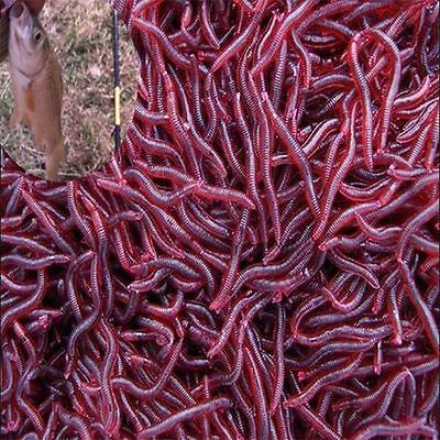 50Pcs Red Earthworm Fishing Bait Worm Lures Crankbaits Hooks Baits Tackle