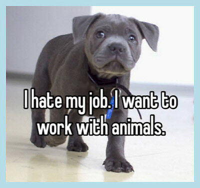 Work From Home Business Opportunity - BILLION DOLLAR Pet Business Industry