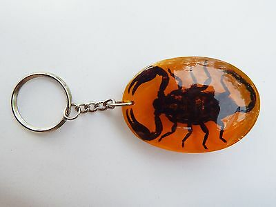 Scorpion Real Insect Keychain Key Amber Jewelry Black Resin Collectibles Gift
