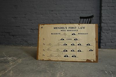 Vintage Retro Mendals Law Earth History Double Sided School Educational Poster