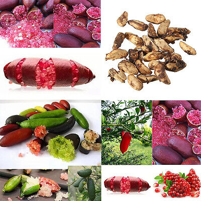 20Pcs Red Green Ice Pink Finger Fruit Lime Seed Rare Plant Home Garden Balcony