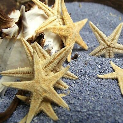 20 pcs Natural Real Starfish Sea Shells Craft Decorations For Micro-landscape