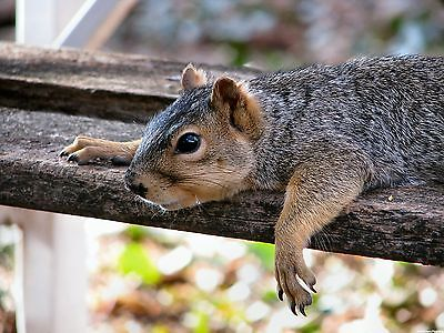 Squirrel 8X10 Glossy Photo Picture Image #8