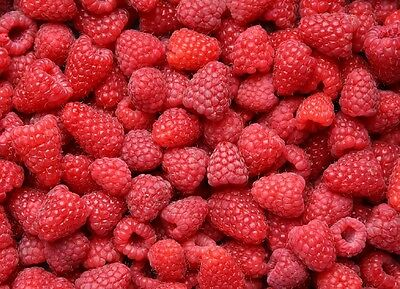 10X Large Raspberry Glen Ample - Fruit Plants - Early Variety