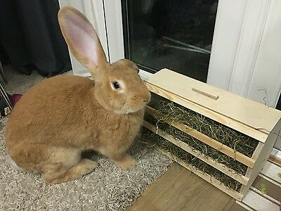 (New Large Rabbit Design)  Hay Rack With Lid (Comes Ready Assembled)