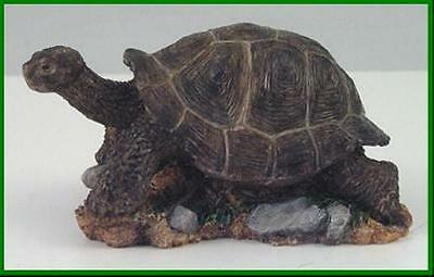 Country Artists Galapagus Tortoise