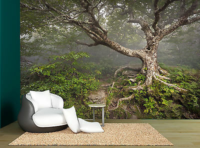 Nature Forest One Old Big Tree Wall Mural Photo Wallpaper GIANT WALL DECOR