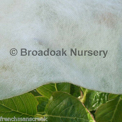 6m x 3m Heavyweight Horticultural Fleece, 30gsm Garden Plant Frost Protection