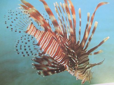 Queensland Guide to Fishes Zoology Barrier Reef Fish Identification Wistari