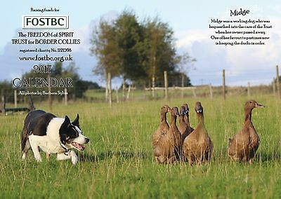 2017 Calendar for FOSTBC Border Collie Dog Rescue Charity
