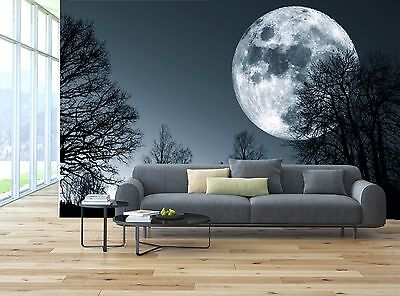 Scary Dark Night Moon Forest Trees Wall Mural Photo Wallpaper GIANT WALL DECOR