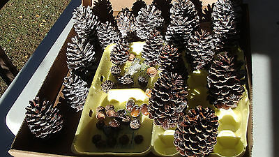 Pine Cones Prepared W/ Faux Snow And Sealed With Clear Enamel For Decorating