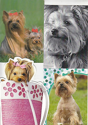 11 Yorkshire Terriers   Dog   Postcards