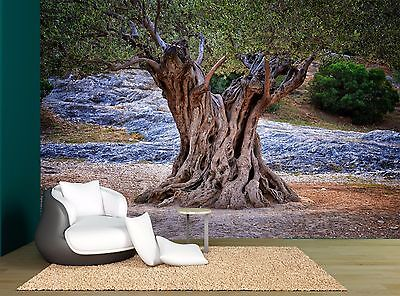 Old Big Tree Trunk Roots Branches Wall Mural Photo Wallpaper GIANT WALL DECOR