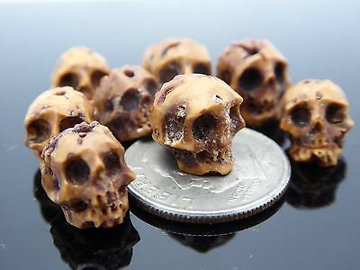 Skull Bead Rare Intricate High Detail Hand Carved Natural Rudraksha One Piece