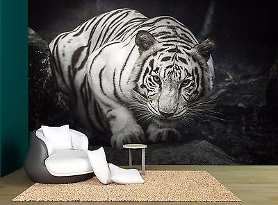 White Tiger Rock Dark Stone Wall Black Mural Photo Wallpaper GIANT WALL DECOR