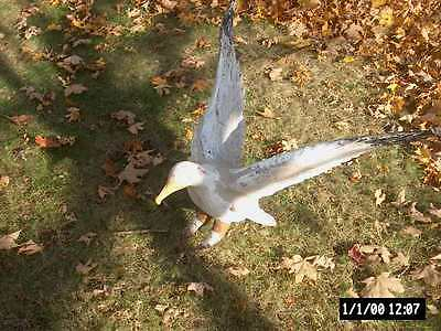 Antique Architectural Large Hand Carved Wood Seagull For Building-Barn-Natick,ma