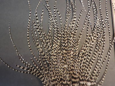 Lot # 75,   Grizzly Dry Fly Rooster Saddle Pieces Feathers Fly Tying & Hair