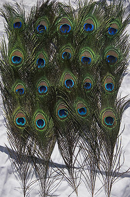 "Peacock Tail Feathers Natural 20""-22"" Inches Long For Bouqet Millinery Craft"