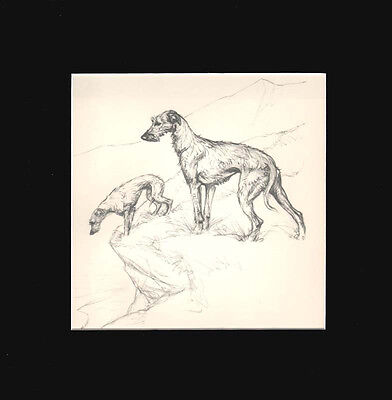 Scottish Deerhound Dogs by G. Vernon Stokes 1936 Dry Point Matted Print LG 12x12