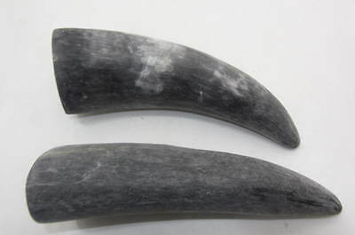 2 Cow horns ....02a6n... Unfinished, raw cow horns.,.....