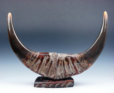 Exquisite Rare Pair LARGE Natural Ox/Buffalo Horns Awesome Home Decor #07261612