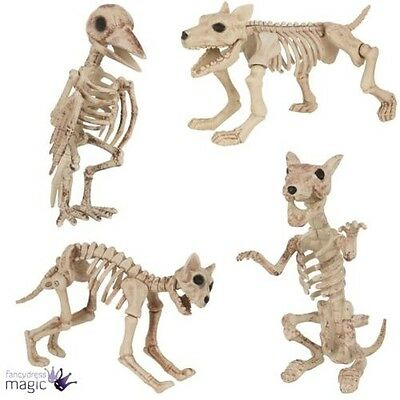 Halloween Hund Katze Ratte Vogel Skelett Dekoration Animal Knochen Requisit