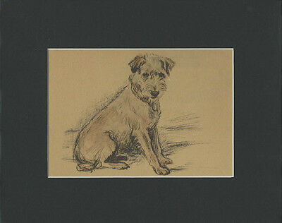 Lakeland Terrier Dog  1937 Matted Print  by Lucy Dawson 8x10""
