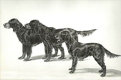 Gordon Setter Dogs by Marguerite Kirmse 1935 8 New Blank Note Cards