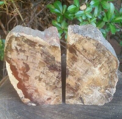 Beautiful PETRIFIED WOOD Polished Book Ends, Rich Brown Fossilised Wood 1.5kg