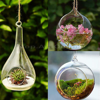 Hot Hanging Glass Ball Vase Flower Plant Pot Terrarium Container Decor