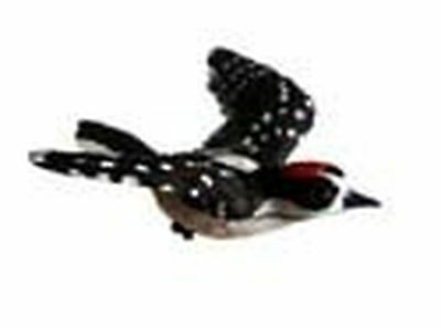 Clark Collection CC52032 Downy Woodpecker Window Magnet