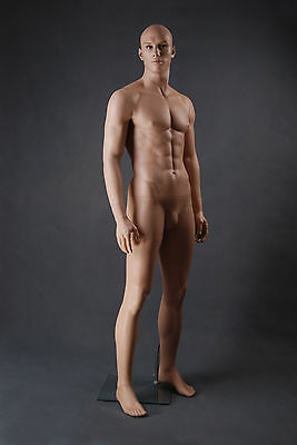 NEW  LifeLike Male Mannequin Shop DISPLAY Equipment Life Size Mannequins