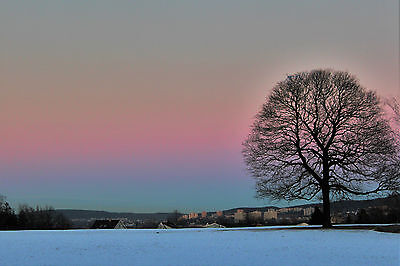 Photography Print of Lone Tree in Snowy Landscape at Sundown NORWAY art