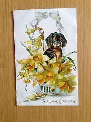 """Christmas Postcard by R Tuck """"Christmas Greetings"""" Dachsund/flowers 1906 Gd Cond"""