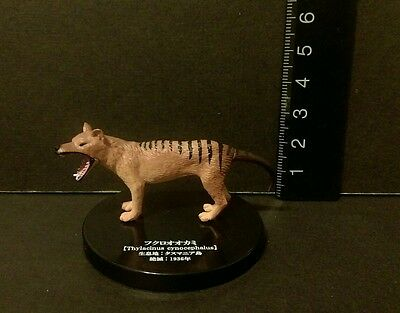 Takara (Not Kaiyodo) Extinct Tasmanian Tiger Wolf Thylacinus Cynocephalus Figure