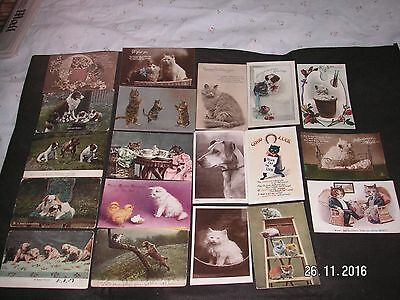 Cats & Dogs - 19 Vintage  Postcards - Art & Photographic - 7 Posted  1903-1919