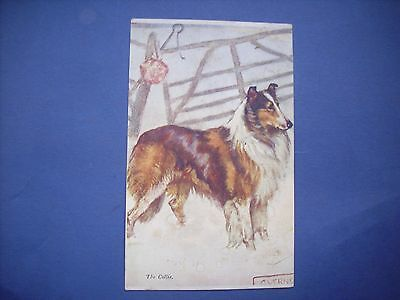 VINTAGE POSTCARD THE COLLIE by G.VERNON STOKES  Posted 1929