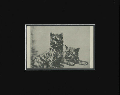 Cairn Terrier TWINS Dog Print 1932 by Diana Thorne 8 X 10 Matted