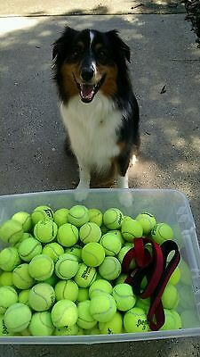 100 used tennis balls$10 extra charge for west coast .Plz c pics ! No p.o boxes