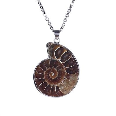 Snail Natural Ammonite Shell Fossil Stainless Steel Chain Stone Pendant Necklace