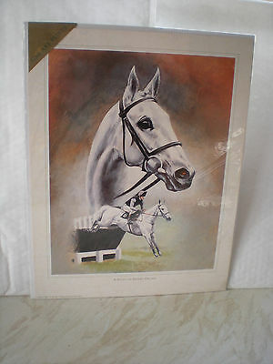 A Study Of Desert Orchid Print By The Artist Caroline Cook -Still Wrapped