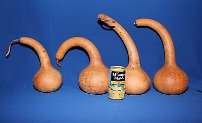Lot of 4 Dipper Gourds -  Small to Medium Sized, Dried & Cleaned