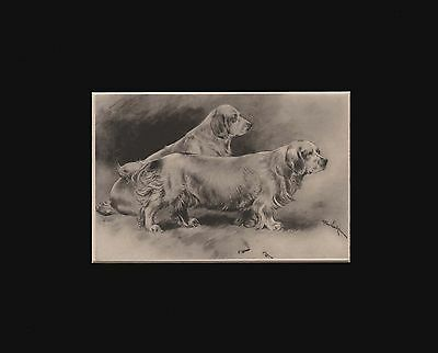Antique Clumber Spaniel Dogs Print  by Arthur Wardle 1897 Matted 8X10
